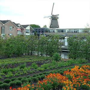 holland-3